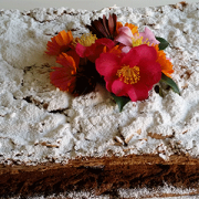 Image of a cake baked for the Lyrebird Day Club