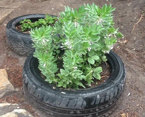 Image of green growing in a tyre tube