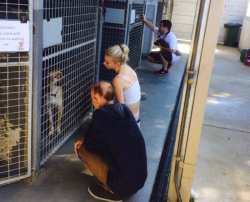 VCAL Coldstream Animal Aid visit