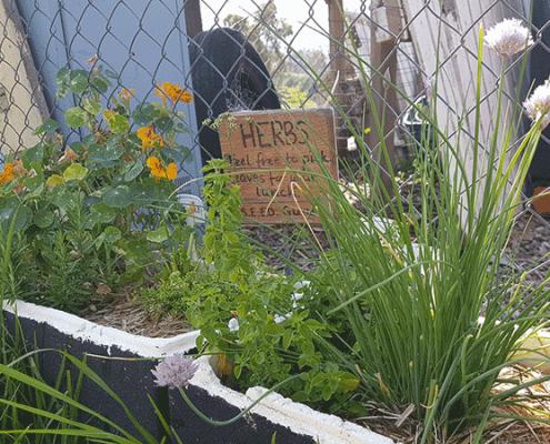 Community garden 'explodes'