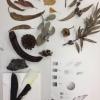 Botanical Illustrations with Bronwyn Ward