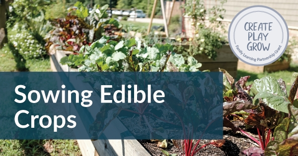 sowing edible Crops Gardening