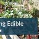 sowing edible Crops Gardening