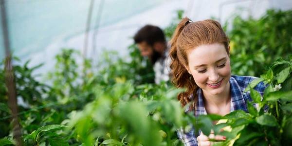 AHC20416 Certificate II in Horticulture